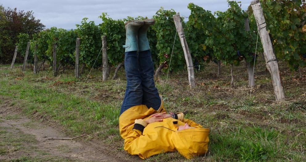 Les petites mains des grands vins
