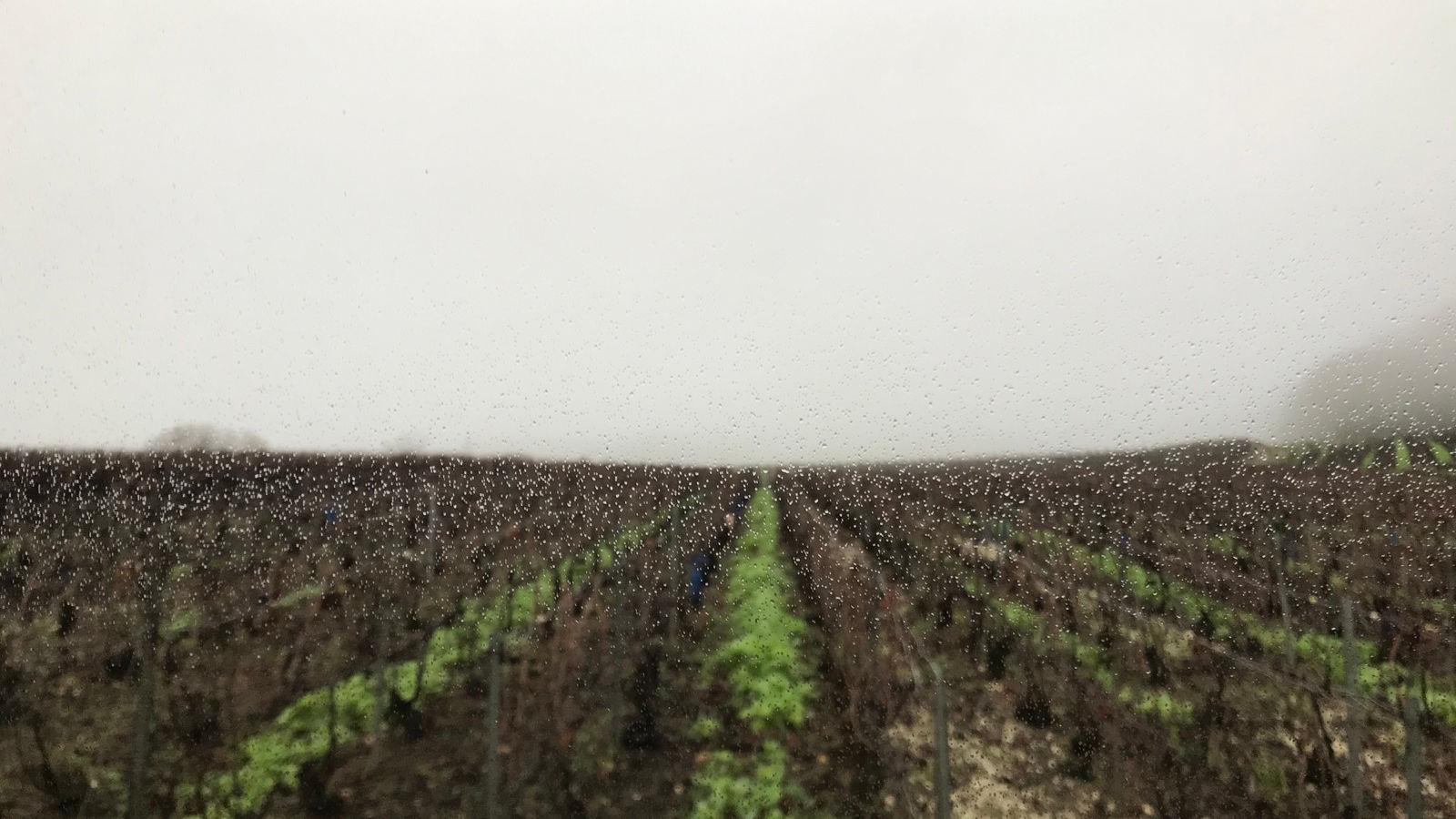 Filles de Vignes, ép. 8 : Liens et ruptures, trois familles de Champagne